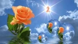 Orange Rose on Blue Sky with Ribbon_300x171px